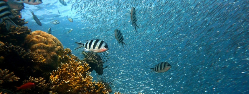 poisson-plongee-sous-marine